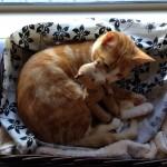 Neko the Wondercat