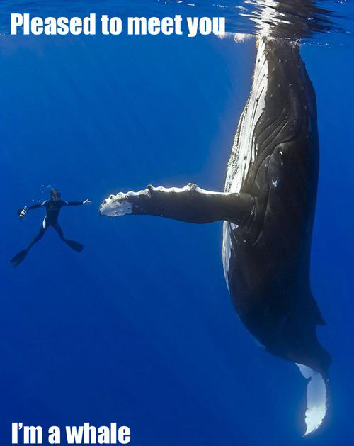 Pleased-To-Meet-You im a whale