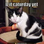 iz it caturday yet thumb